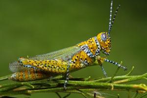 Необычно красивое насекомое