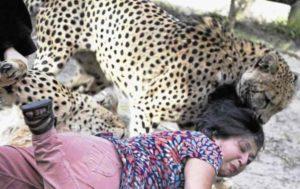 Нападение диких зверей