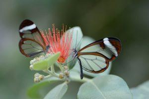 Порхание бабочек