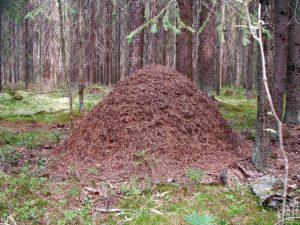 Дом лесных насекомых