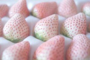 Незрелые ягоды