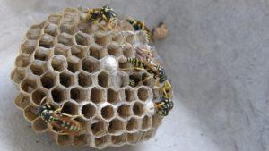 Дом опасных насекомых