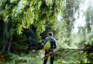 Заплутать в лесу