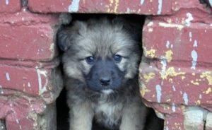 Бездомное животное