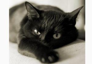 Черное животное
