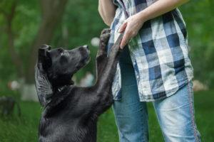 Ласкать черного пса