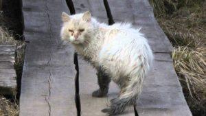 Сонник Раненая Кошка в крови во сне видеть к чему снится?