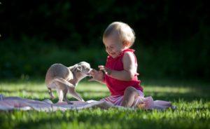 Играть с животным
