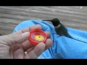 Кормить птичку
