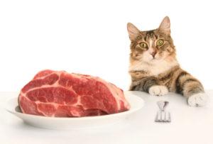 К чему снятся голодные кошки кормить кошек