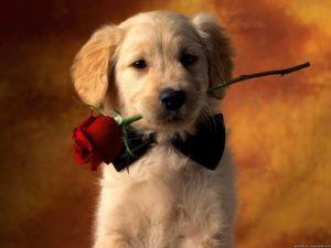 Милый щеночек