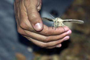 Ловить насекомое