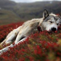 Мертвый пес