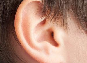 наружное ухо