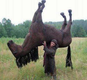 Украсть коня