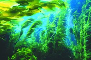 Травы морские