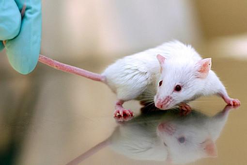 rat lab
