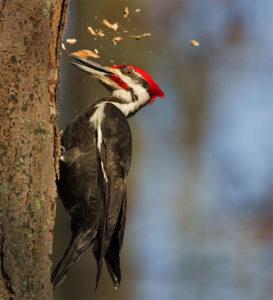 Красноголовая птица