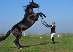 Огромный конь