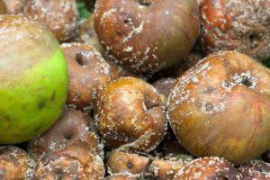 Порченные плоды