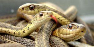Отбиваться от змей