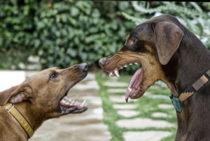 Разнимать псов