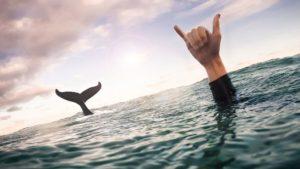 Китовый плавник
