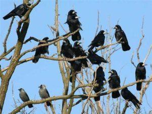 Много птиц