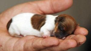 Родить щенка
