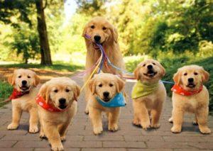 С щенятами