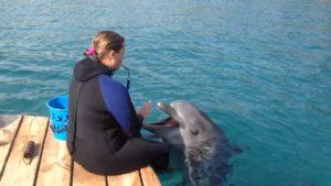 Давать еду дельфину