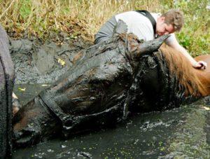 Спасение лошади