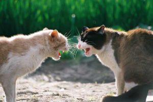 Агрессивные животные