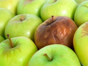 Сгнивший плод