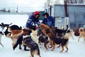 Кормить бездомных псов