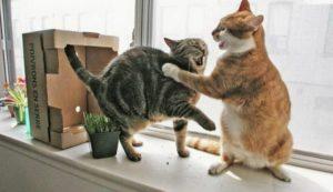 Из-за кошки
