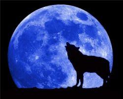Как волчий