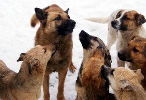 Агрессивные псы
