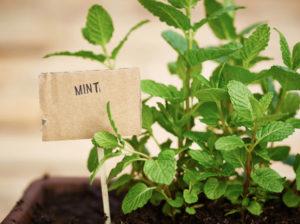Выращивать
