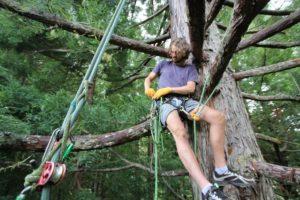 Взбираться на дерево