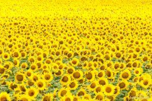 Во сне видеть желтый цвет
