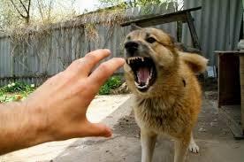 Пугаться пса