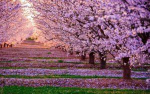 Благоухающий сад