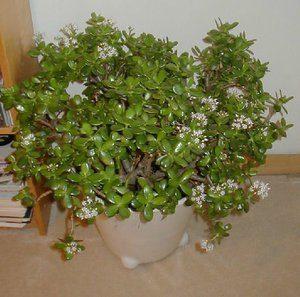 Растение в цветах
