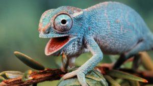 Необычная рептилия
