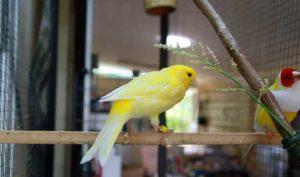 Выпустить птицу