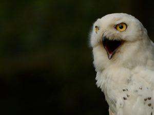 Крик птицы
