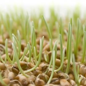 Проросшие семена