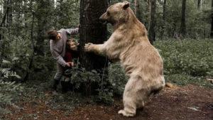 От медведя
