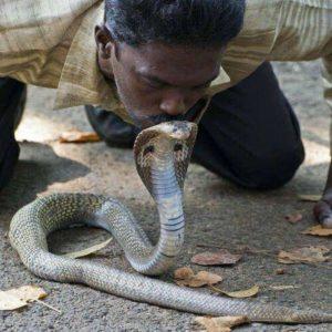 Противостояние со змеей
